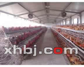 广东鸡笼供应