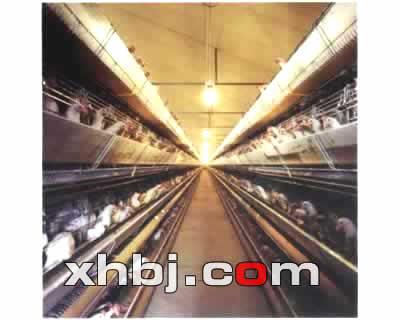 鸡笼出售厂家