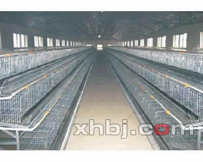 广东鸡笼价格
